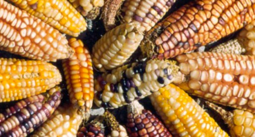 Trío fantástico: calabaza, maíz y frijol.