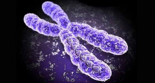 Los cromosomas y sus determinaciones sexuales