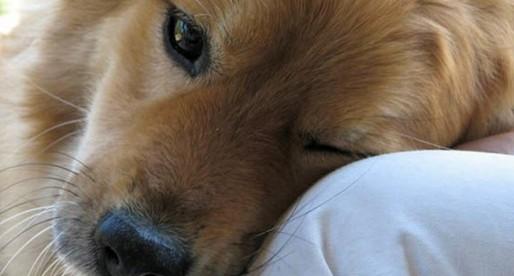 20 razones para tener un perro