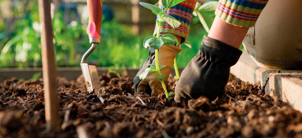Ciencia para formar a los buenos jardineros descubre for Se necesita jardinero