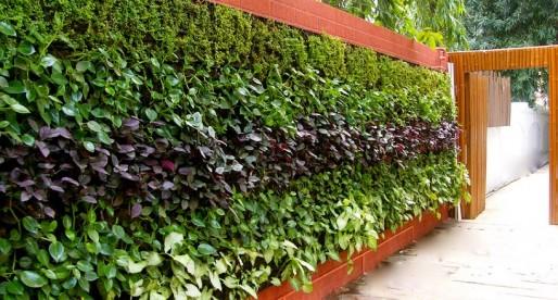 Paredes verdes para cultivar alimentos