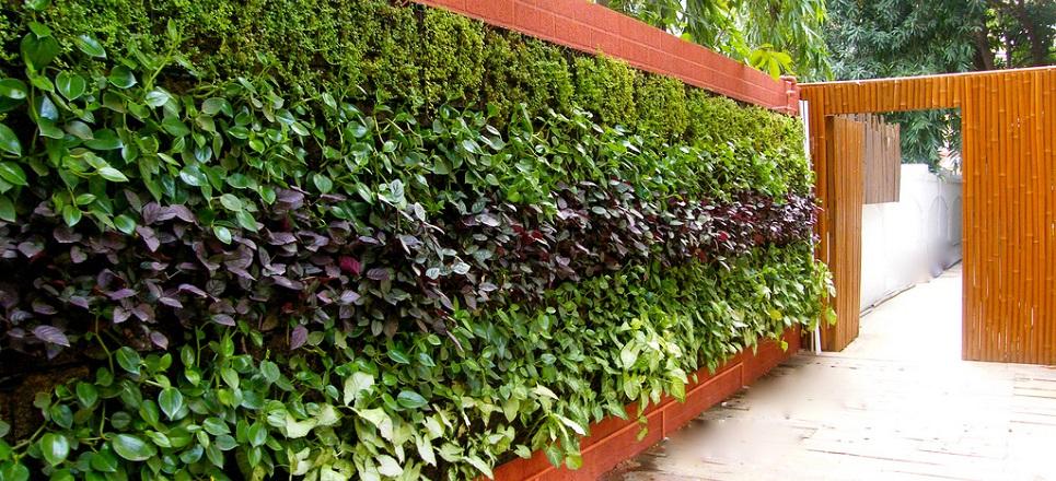 Paredes verdes para cultivar alimentos : Descubre Fundaciu00f3n UNAM