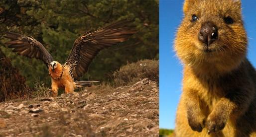 18 extraños animales que no conocías