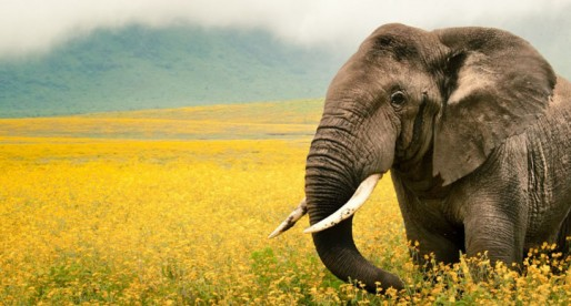 Matanza indiscriminada de elefantes africanos