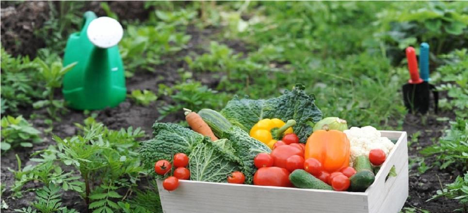 Los beneficios de tener tu propio huerto en casa - Que plantar en el huerto ...