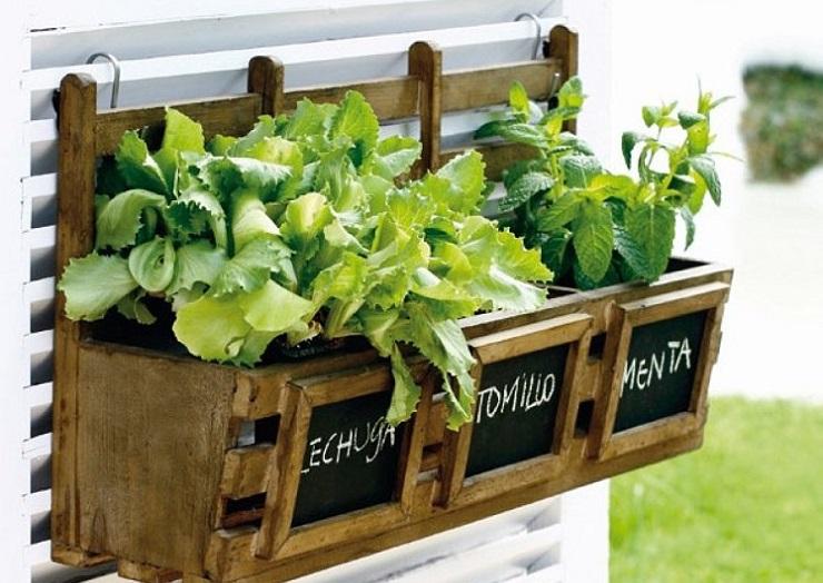 Los beneficios de tener tu propio huerto en casa for Diseno de jardines caseros