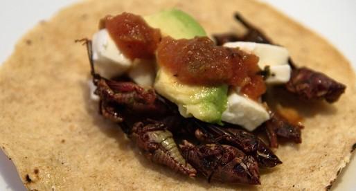 5 buenas razones para comer insectos