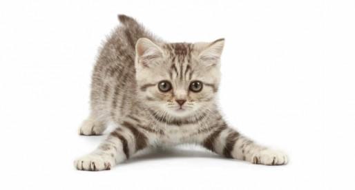 El gato: la mejor mascota para vivir en las ciudades