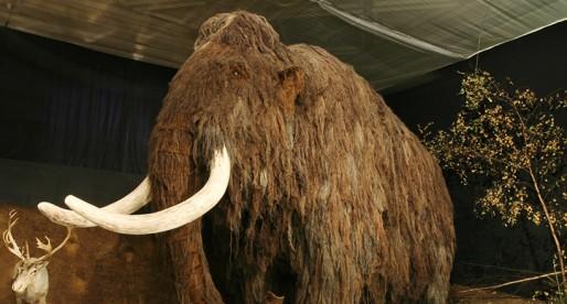 Científicos insertan ADN de mamut en el genoma del elefante