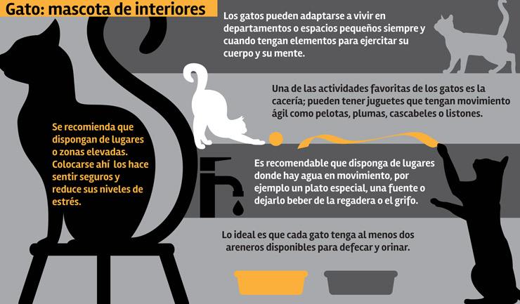 gatos_infografia