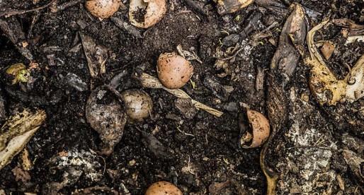 Planta de composta en CU