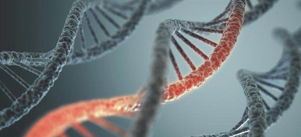 La maravilla del ADN: El genoma humano