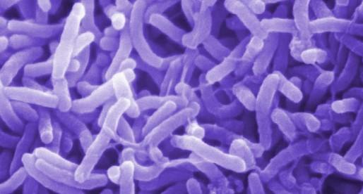Cólera, la lección de una epidemia en México