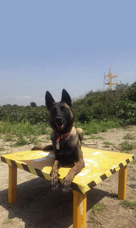 """""""Los perros de búsqueda tienen una capacidad olfativa muy grande, a comparación de nosotros, ellos ven al mundo con su nariz"""" Foto: Nancy Estrada"""