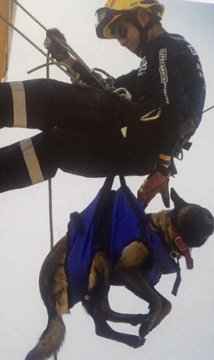 Instructor David Muñoz Zamudio capacitando a uno de los perros de búsqueda y rescate. Foto: Federación Canófila Mexicana