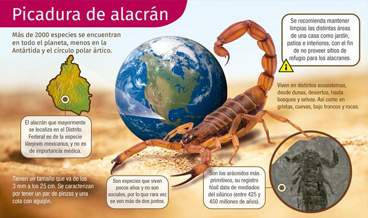picaduraALACRAN2