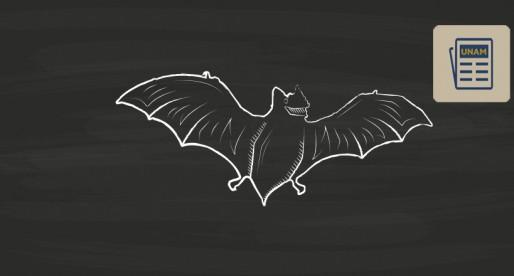 Murciélagos, una especie necesaria