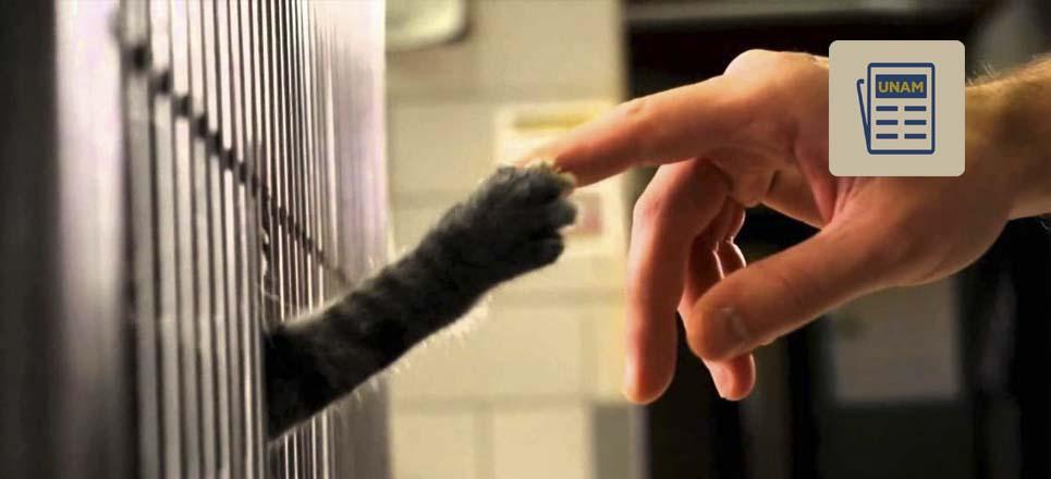 Adopta una mascota con tu celular