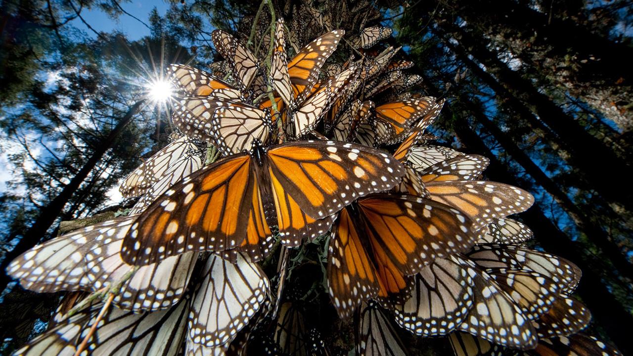 mariposa_contenido1