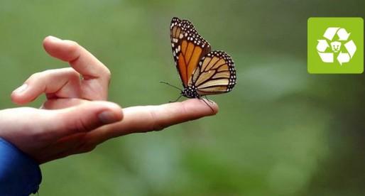 UNAM busca proteger a la mariposa monarca