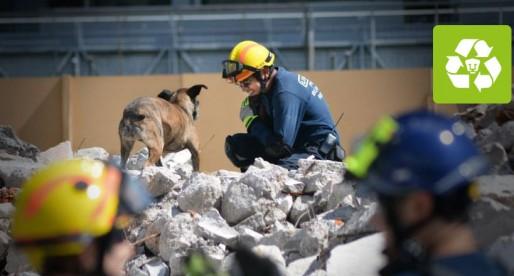Perros que salvan vidas