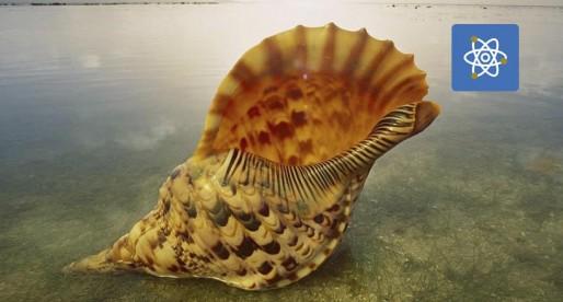 Veneno de caracoles marinos, podría combatir el cáncer