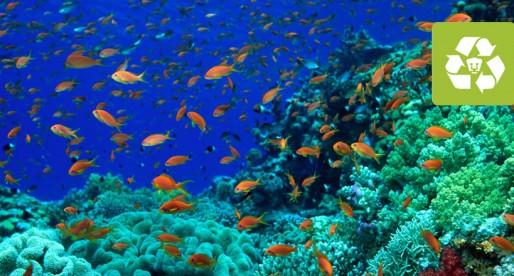 La importancia de conocer la biodiversidad del mar profundo