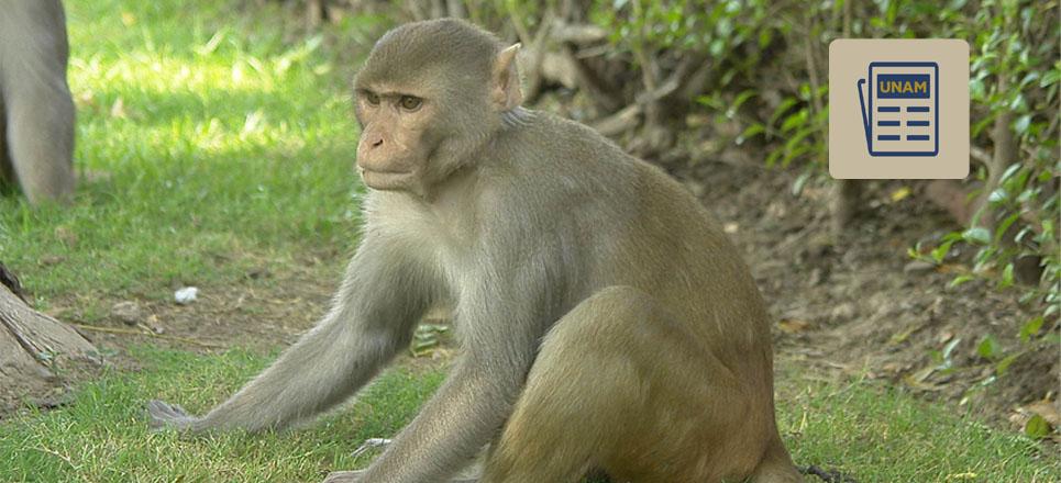 Ayuda UNAM a identificar nuevos virus en monos