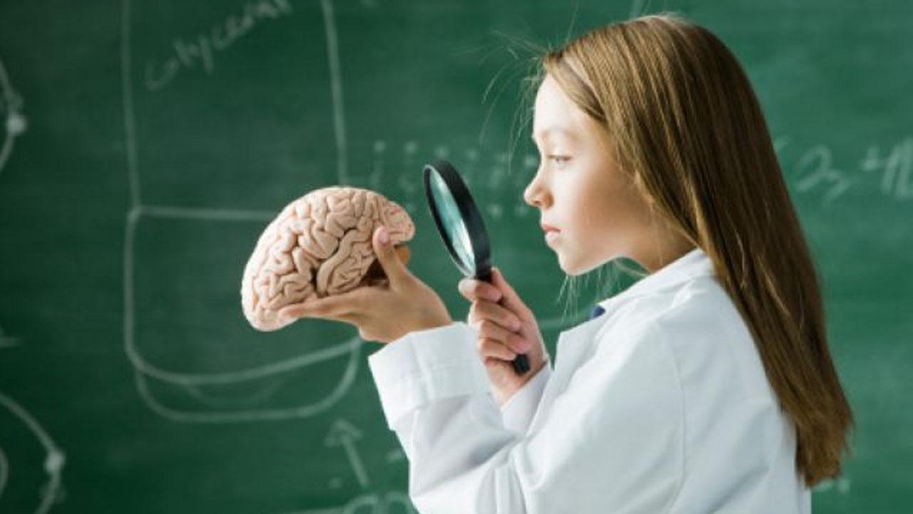 cerebro_contenido1