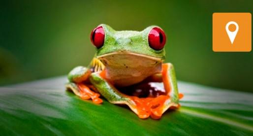Pretende Herpetario cambiar la imagen de los reptiles