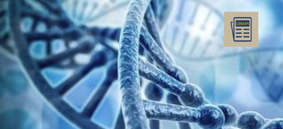 Identifica UNAM gen que produce enfermedad renal