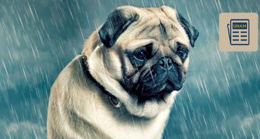 La UNAM explica: Las mascotas también pueden deprimirse