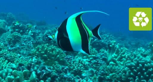 UNAM trabaja en la conservación de arrecifes