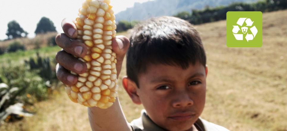 Obtiene UNAM variedad de maíz más nutritivo para consumo humano