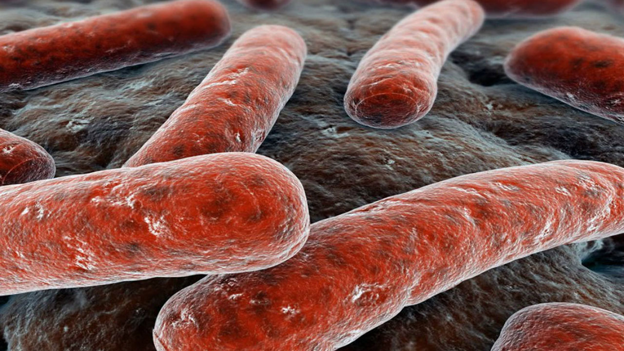 antibioticos_contenido1