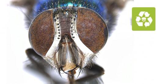 Insectos, la clave para resolver un crimen: UNAM
