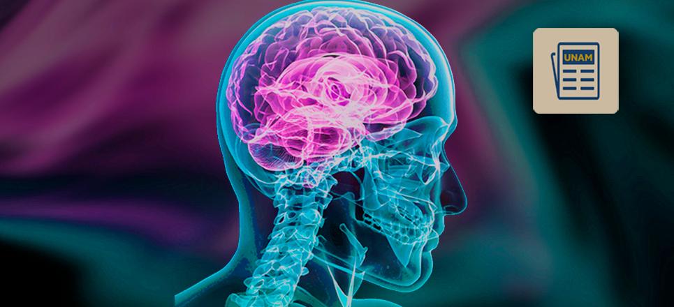 Estudia UNAM cómo disminuir infartos cerebrales