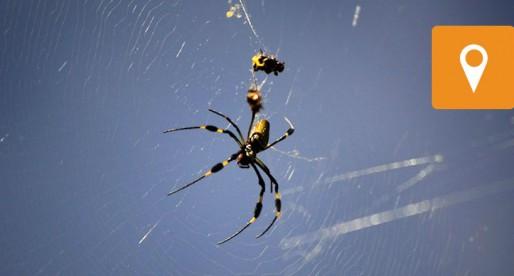 Descubre el Laboratorio de Arañas de la UNAM