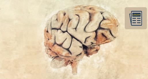 La UNAM te explica: ¿Qué es la plasticidad neuronal?