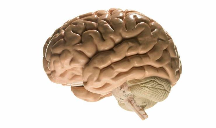 plasticidadneuronal2