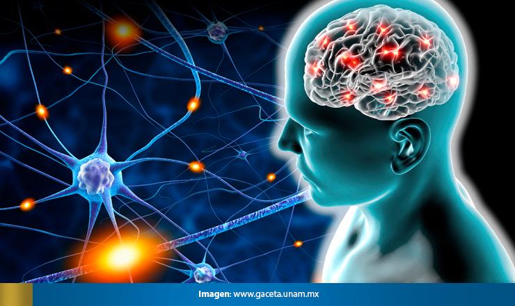plasticidadneuronal3
