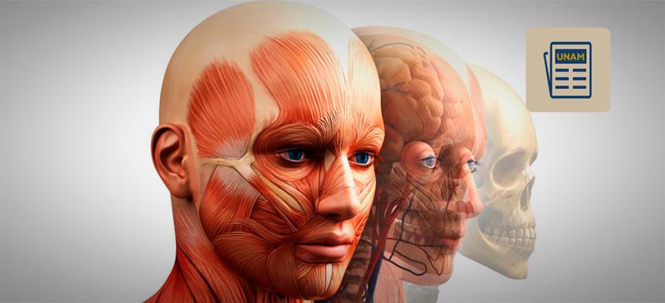 UNAM apuesta por la descelularización de tejidos y órganos vitales
