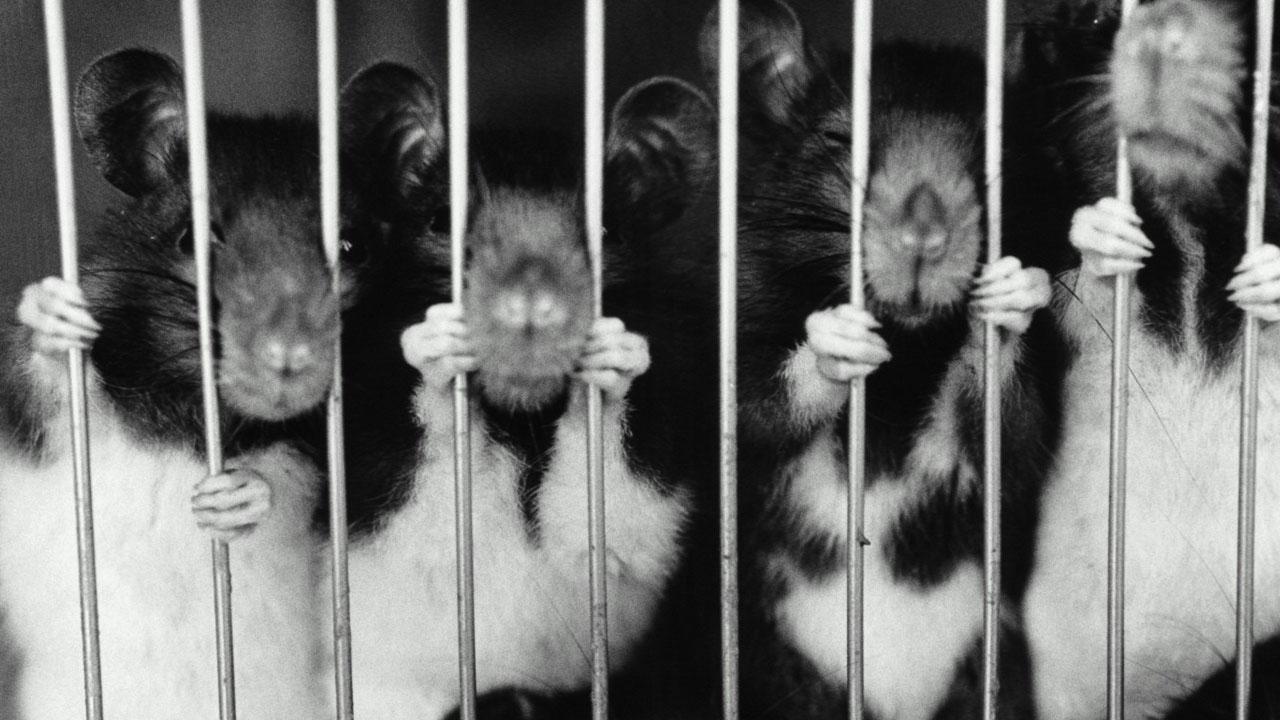 animales_experimentacion_contenido2