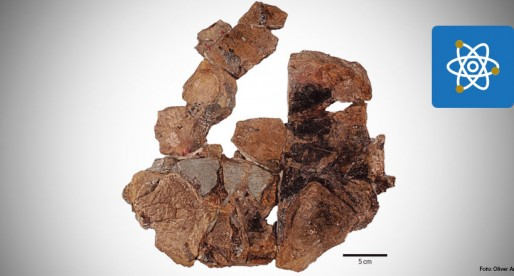 Descubre UNAM fósiles de tortuga jurásica