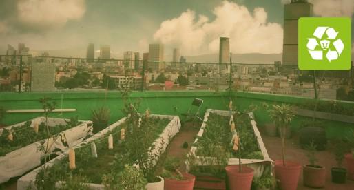 Azoteas verdes, una opción ecológica y ahorrativa
