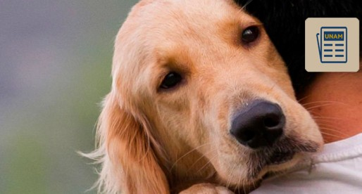 La UNAM te explica: ¿Sabes qué es la Brucesolis Canina?