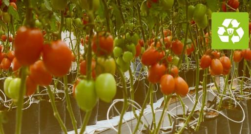 UNAM diseña sistemas de producción sustentables de hortalizas