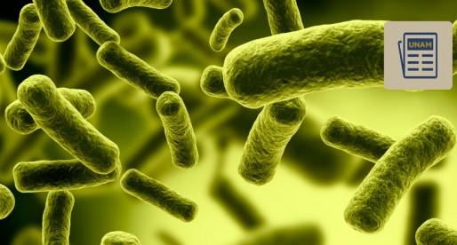 UNAM desarrolla detector de bacterias en el ambiente