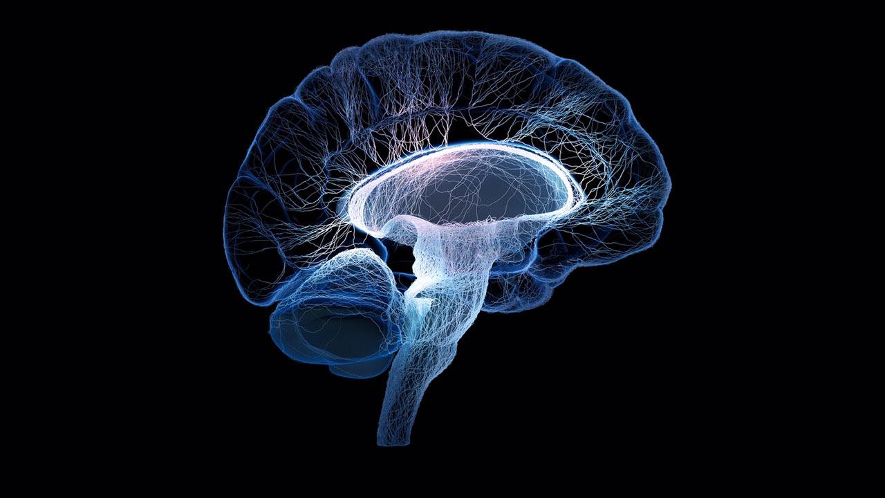 neurociencias_contenido1