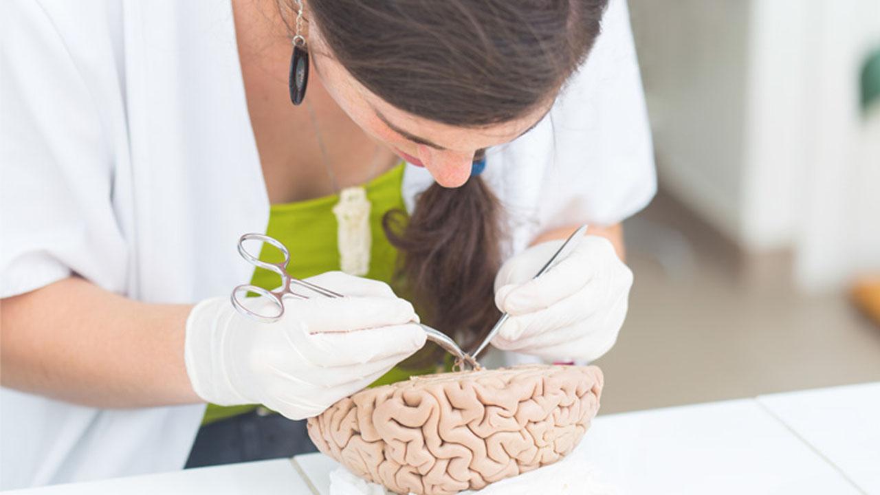 neurociencias_contenido2